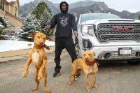 Питбули и бойцы: О том как Теренс Кроуфорд и заводчик собак помогли друг другу