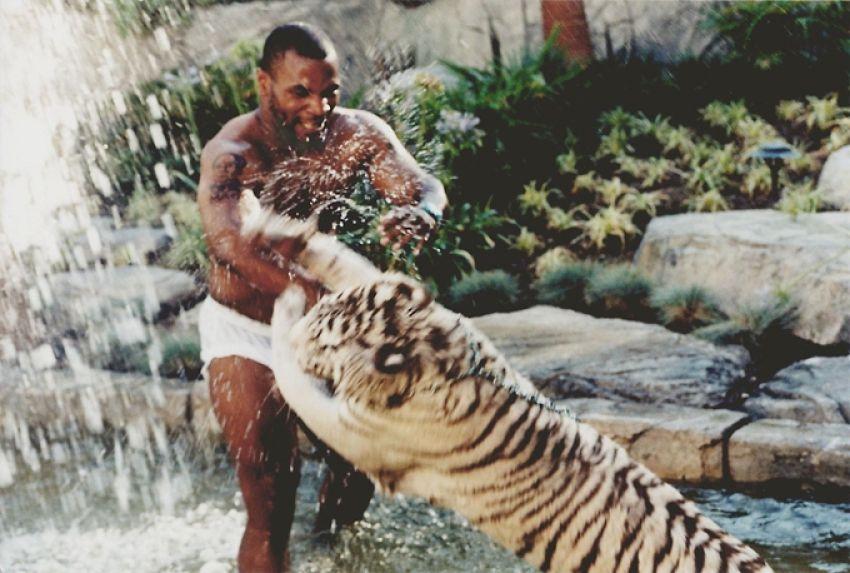 Майк Тайсон сожалеет о том, что держал у себя дома тигров